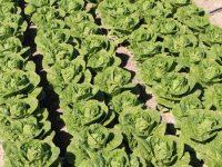 Syngenta apuesta por la reduccción del desperdicio alimentario en Fruit Logistica 2019
