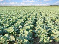 Convocadas ayudas para el fomento de la creación de OPs en el sector agrario
