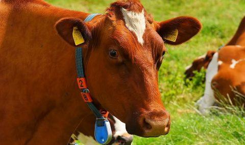 Mecanización en ganadería, alta tecnología?