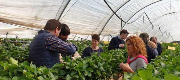 El riego a demanda en sustrato logra reducir un 28% el consumo de agua en el cultivo de fresa en Huelva
