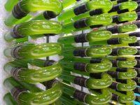 AlgaEnergy confirma su presencia en Infoagro Exhibition por segunda vez