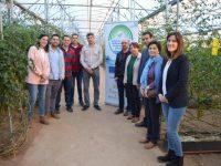 Sistemas de riego más eficientes en el cultivo de tomate cherry en invernadero