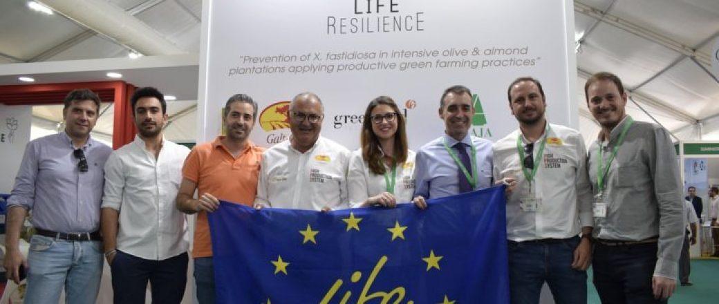 Life Resilience evalúa la resistencia de 1.050 genotipos de olivo a Xylella fastidiosa