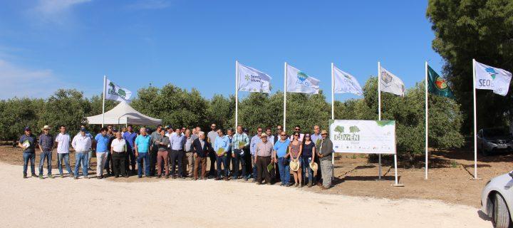 El Grupo Operativo CUVrEN_Olivar demuestra los beneficios de las cubiertas vegetales
