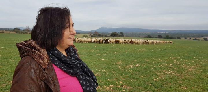 La oveja guirra y la recuperación del pastoreo en el sur de Valencia