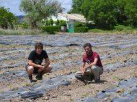 Huertos Vega del Tajuña, recuperando la calidad del producto