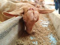 Aguacavalue: valorización de coproductos del aguacate para el desarrollo de nutrición animal, nutracéuticos y cosmecéuticos
