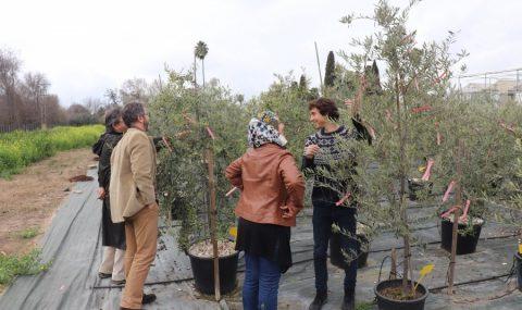 Olive Miracle, una aplicación para predecir el futuro del olivo