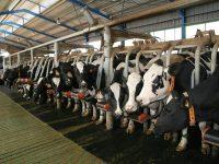 Nuevas tecnologías aplicadas a la gestión de explotaciones ganaderas