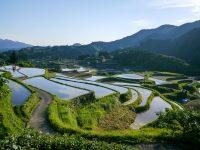 AlgaEnergy se adhiere a la Asociación de Bioestimulantes Japonesa