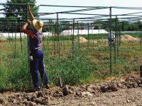 Convocadas ayudas a programas de formación en el medio rural