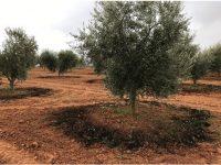 Cómo incrementar la productividad de los cultivos en Extremadura