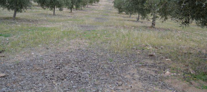 Atresbio, nuevo proyecto andaluz para la obtención de bioproductos