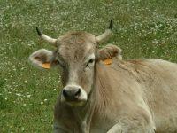 Valles del Esla recupera la ganadería extensiva en León