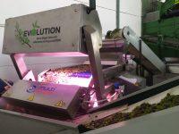 EVOOlution, la nueva selección óptica e individual de aceitunas