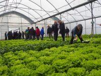 El papel como alternativa al plástico en el acolchado de cultivos