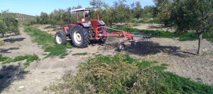 Maquinaria para el manejo de restos de poda en cultivos frutales