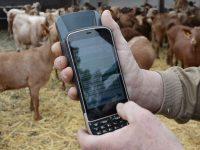 Amaltea lanza una herramienta de gestión de explotaciones caprinas