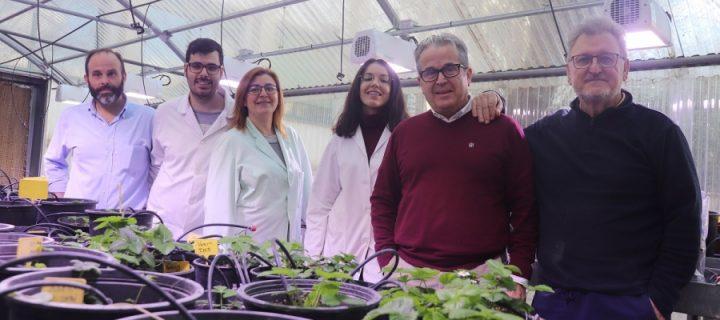 Descubren un nuevo gen que vigila la maduración de la fresa