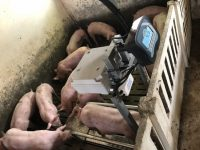 El Grupo Operativo Integraporc instala nuevas tecnologías para mejorar la eficiencia en las explotaciones porcinas
