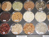 Aprobado un nuevo reglamento sobre acceso a los recursos fitogenéticos