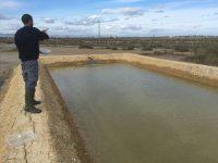 Campos de arroz salinizados, la solución para cultivar almejas