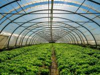Mejorar la producción bajo invernadero con sistemas pasivos de calefacción y refrigeración
