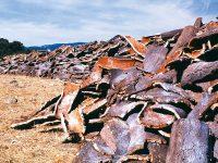 Acuerdo para mejorar la rentabilidad del sector corchero