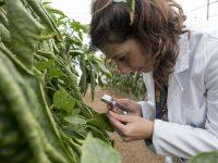 La Fundación Cajamar se une a un consorcio internacional para la gestión de plagas