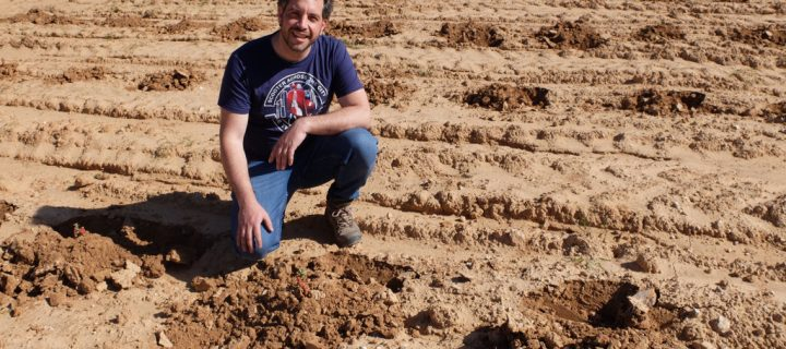 Bodegas Territorio Luthier recupera variedades de uva en peligro de extinción