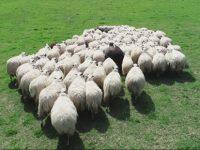 Drones para el control de la ganadería extensiva
