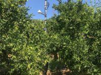 Cultivos con la mitad de agua, menos abono y más producción