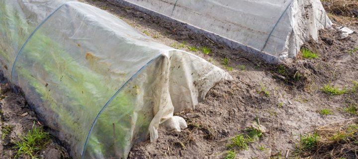 Biodegradación de plásticos agrícolas a través de insectos y microorganismos