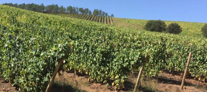 Un proyecto de economía circular de valorizacion del bagazo de uva