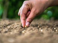Estudian las prácticas agrícolas para mejorar la gestión de suelos