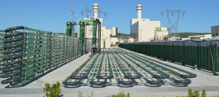 AlgaEnergy gana el primer premio en la feria China Special Fertilizer Expo