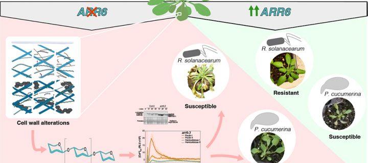 Nuevos métodos sostenibles para la protección frente a plagas de los cultivos