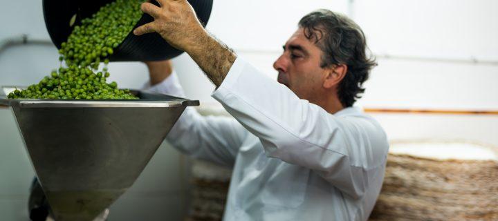 Aceites La Matilla centra su éxito en el cuidado del olivo para obtener calidad en su producto