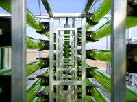 AlgaEnergy se expande a Francia y África del Norte