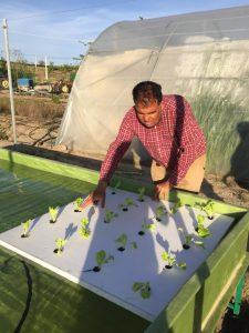 Nuevo método: agricultura hidropónica