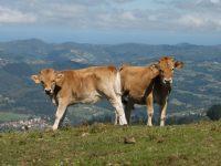 Impulsan un centro de innovación tecnológica para el medio rural en Asturias