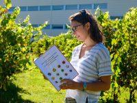 Los viñedos con cubierta vegetal espontánea facilitan la viticultura sostenible
