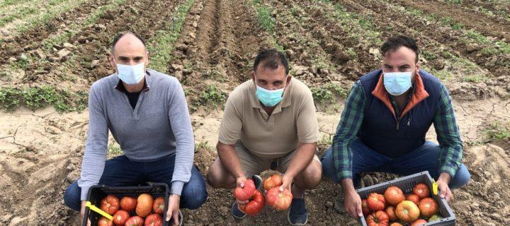 Moruno, Gordo y Antiguo, las tres variedades de tomate tradicional recuperadas que se comercializan en lineales madrileños