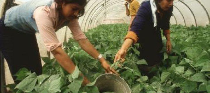 Modificada la normativa de subvenciones a entidades de mujeres rurales y a programas plurirregionales de formación rural