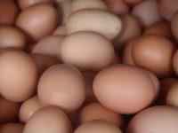 Valorizan las cáscaras de huevo en procesos de descontaminación de las aguas