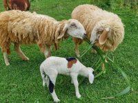 Reciclan subproductos agroindustriales para alimentación animal