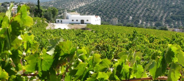 Los viñedos rodeados de paisajes naturales pueden reducir los brotes de plagas