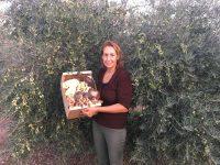 Setacor completa el círculo cultivando setas para mejorar la fertilidad del suelo de su olivar