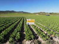 El Grupo Operativo de Acolchados Biodegradables, elegido como ejemplo de innovación para la producción agrícola europea