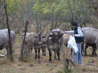 Cumbres del Guadarrama, una ganadería 4.0